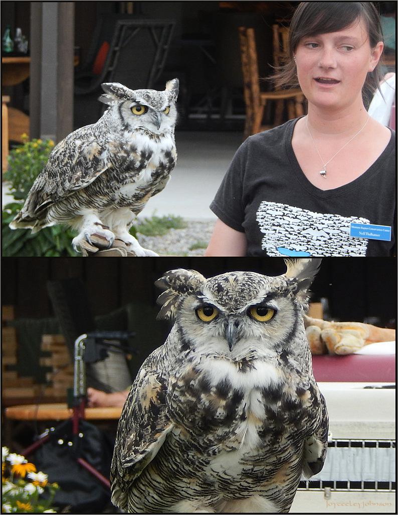 Raptor Ambassadors #1- Owl Handsome