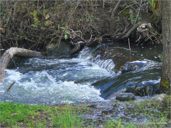 My Creek Runneth Over