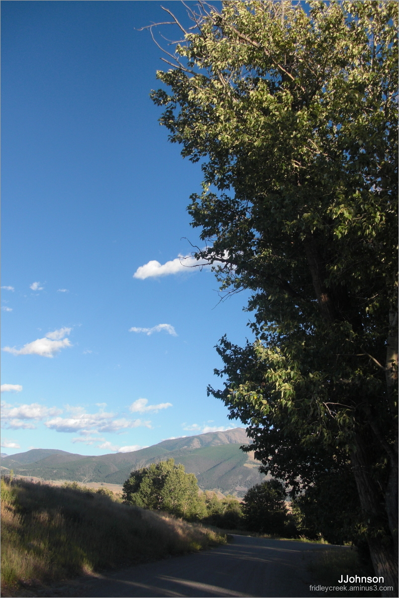 Lofty Cottonwoods at Long Shadow Time
