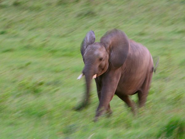 Impression of baby elephant