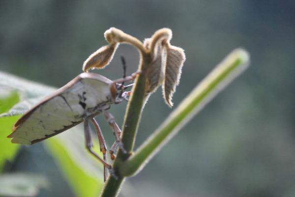 The Bug...!
