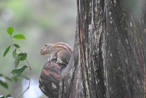 Cute Squirrel...!