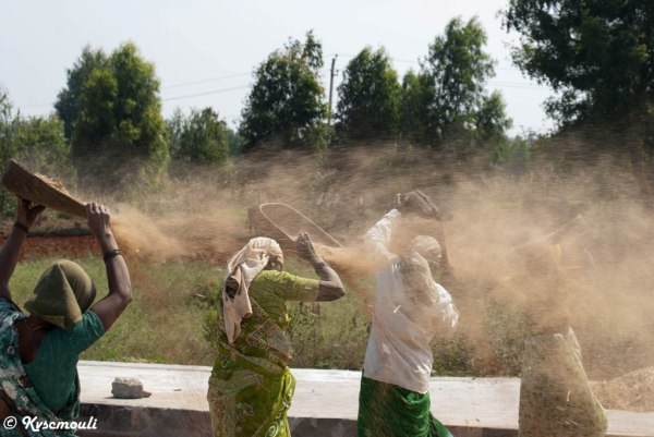 Farmers...clearing the waste from Seeds.