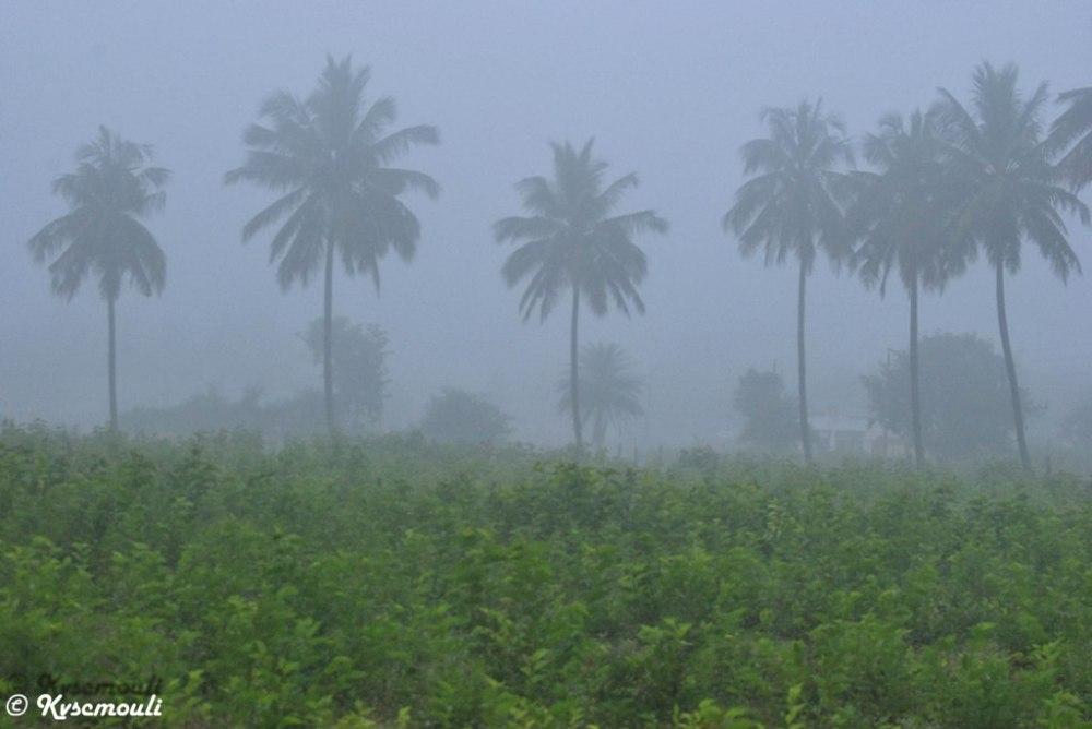 Nature Green...Morning Mist..!