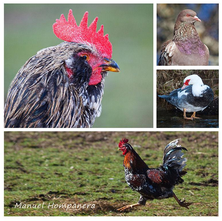 Retratos en la granja 4