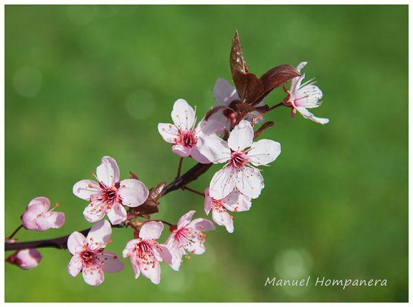 Detalle primaveral
