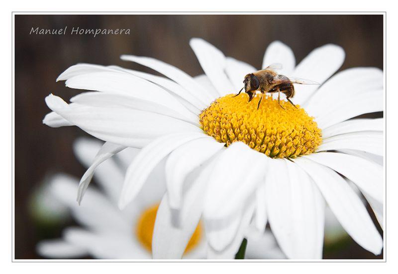 Sobre la flor