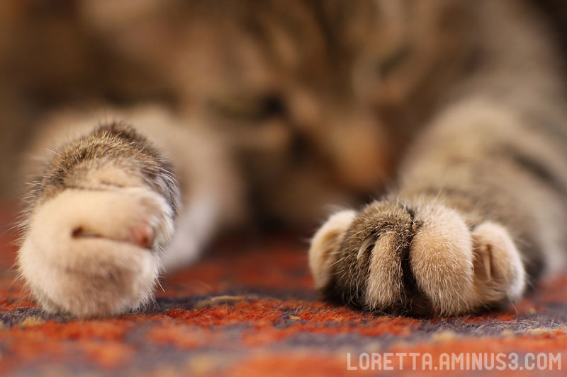 All paws