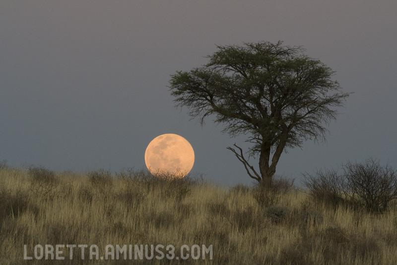 Kalahari full moon