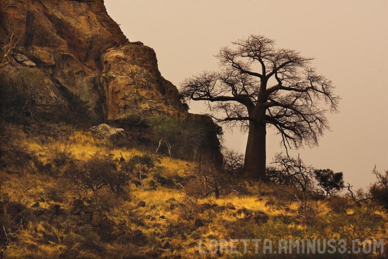 Baobab landscape