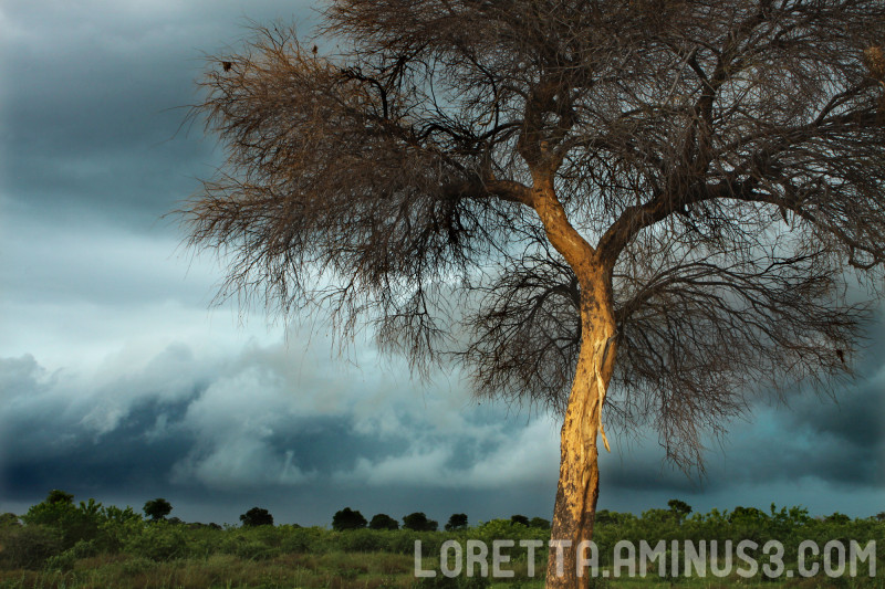 Ominous weather in the Caprivi strip in Namibia