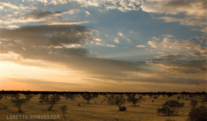 Kalahari grassland
