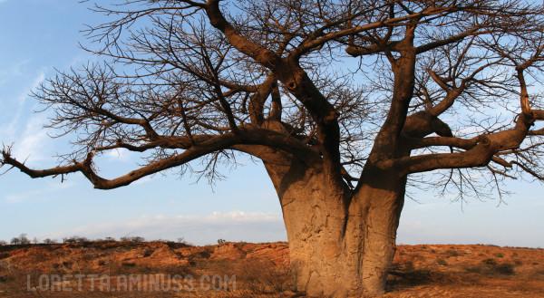 Mapungubwe giant