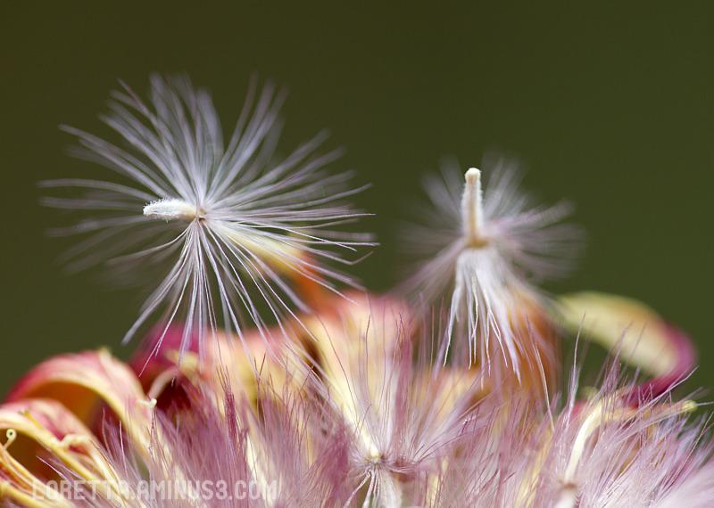 Seed dispersal III