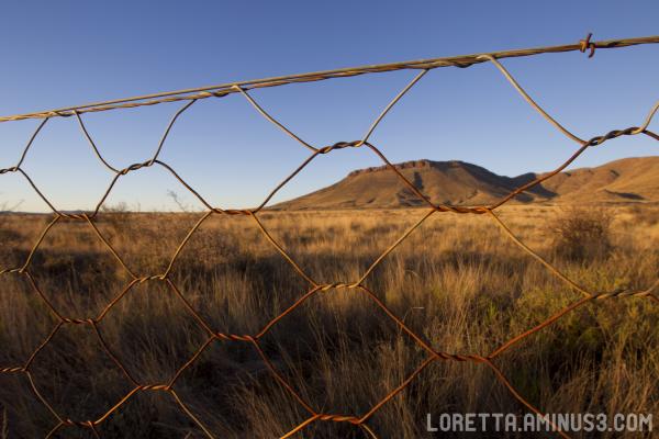 Karoo fence