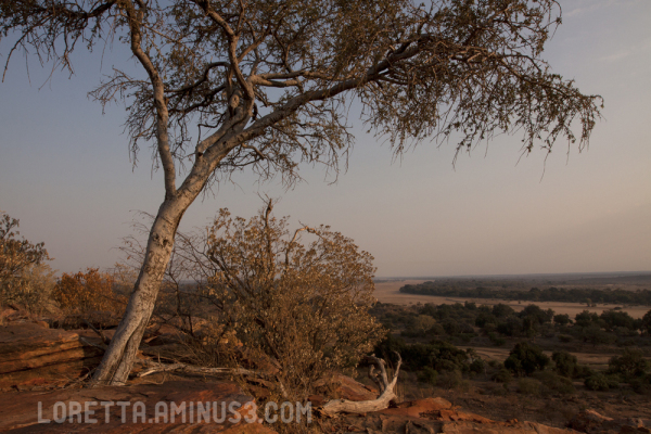 Magical Mapungubwe