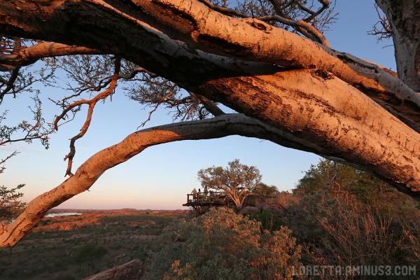 Mapunguwe golden hour