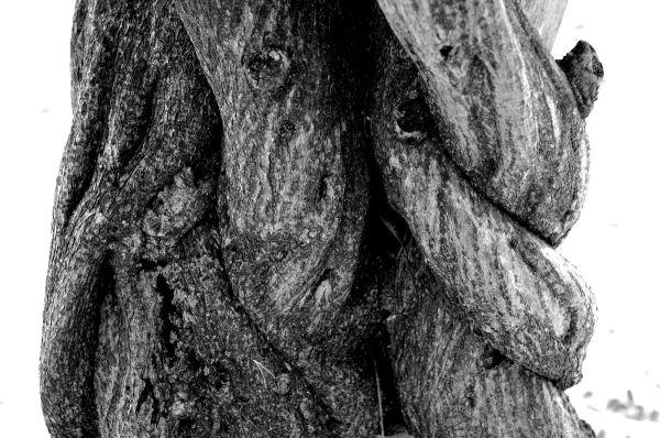 arbre tronc noeud roanne