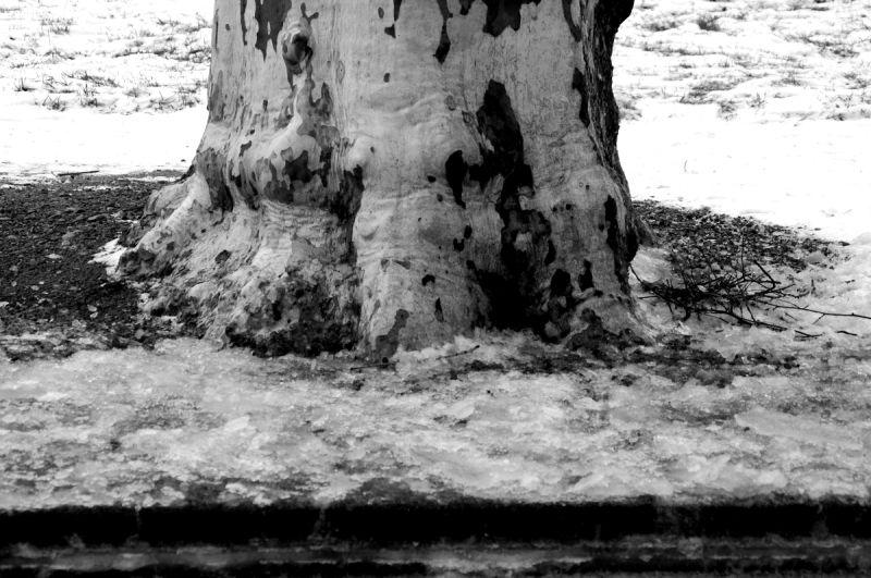 arbre tronc noeud roanne écorce