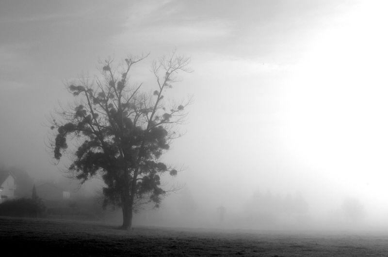 arbre tronc noeud brume loire