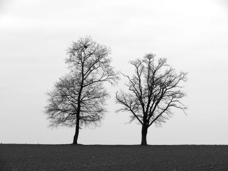 arbre tronc noeud silhouette loire
