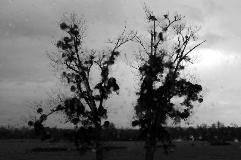 arbre tronc pluie silhouette loire