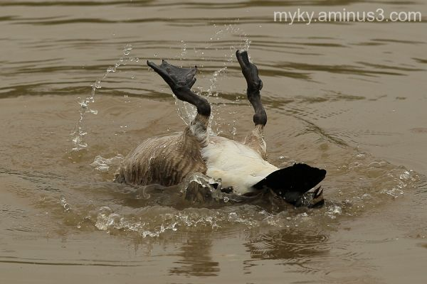 Play Time in the Goose World!