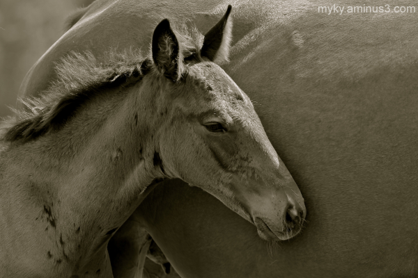 Portrait of Bliss...Mare and Foal