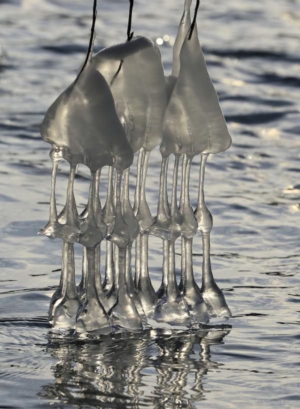 Ice Art...3