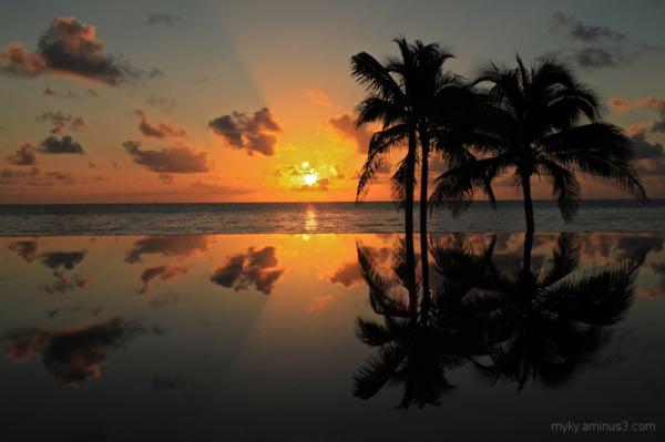 water ocean infinity pool palms