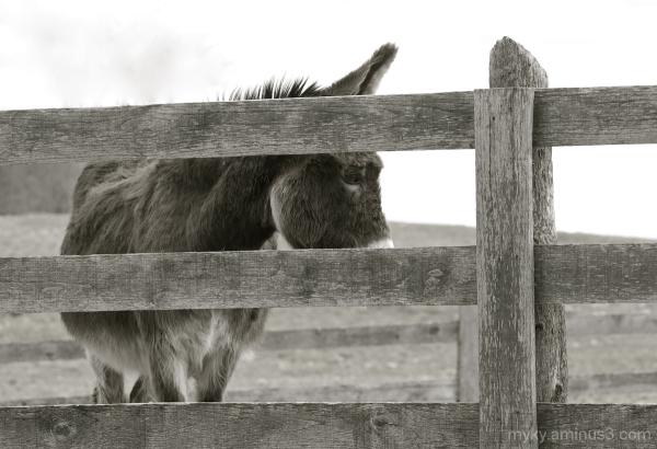 At the Donkey Sanctuary...