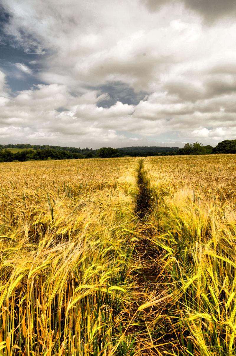 blowing free......like a corn field.......