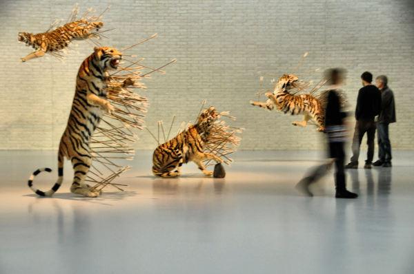 tiger tiger..............