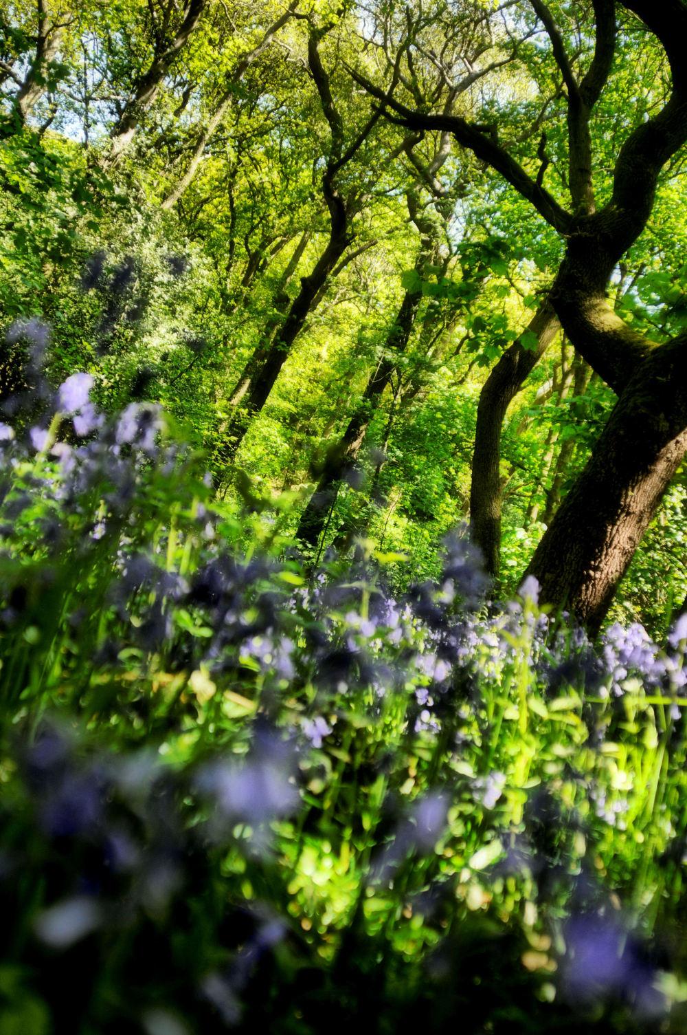 Middleton woods