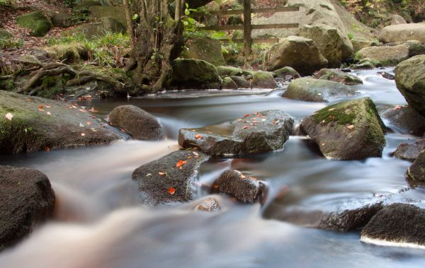 Water flowing through Padley Gorge in Autumn