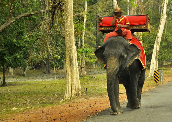 Don't text and drive (an elephant)
