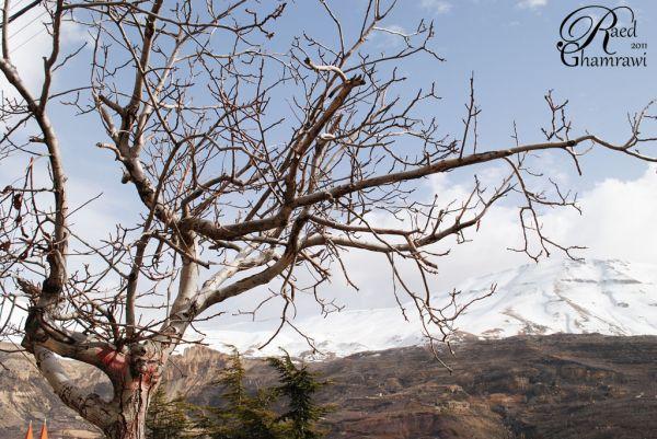 Desolated Trees