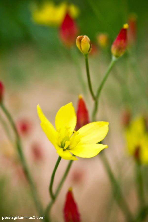 Hope Flower..!