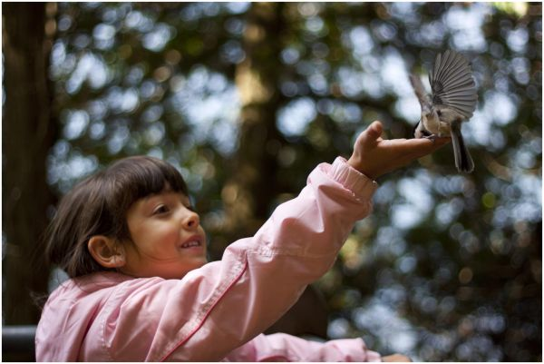 A chickadee delights my young niece.