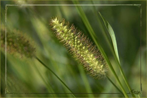 Fleur sauvage herbacée
