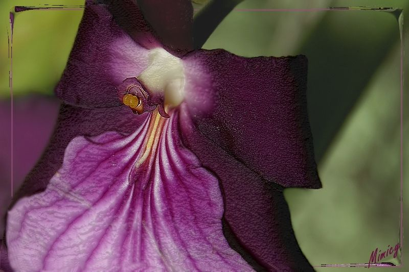 Fleur d'orchidée