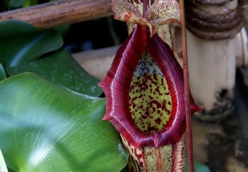 flower fleur plante nature macro