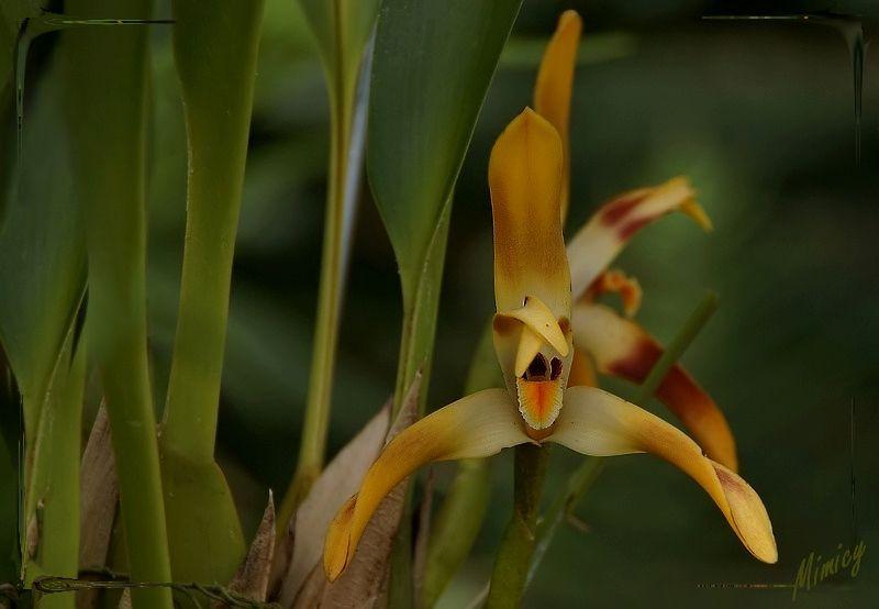 flower fleur nature macro orchidée