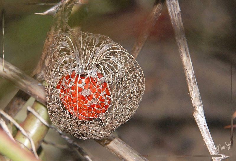 flower fleur sauvage nature macro