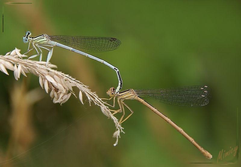 nature sauvage libellule macro