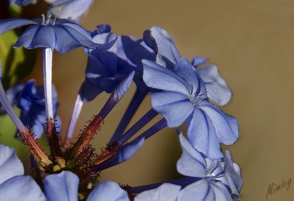 flower fleur nature macro