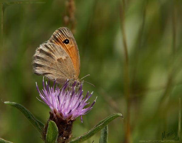 nature sauvage papillon