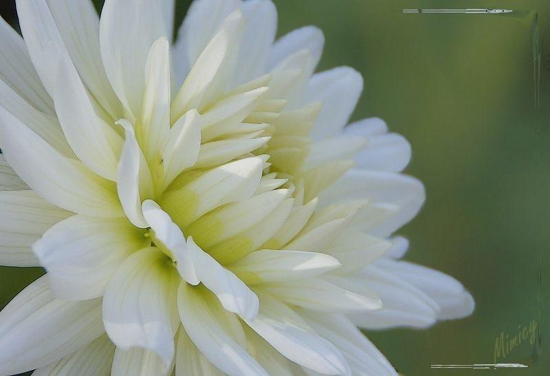flower fleur nature macro dahlia