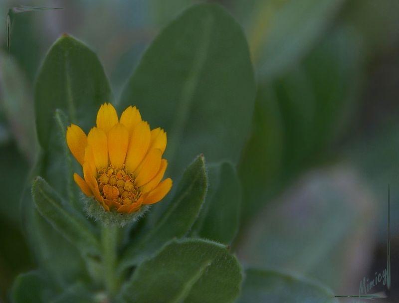 flower fleur nature sauvage macro