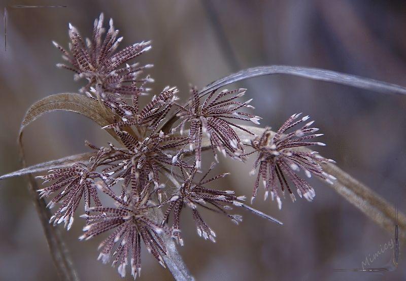 flower nature sauvage macro